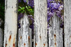 Detail of old faded white wooden fence with rusting nails Stock Photo
