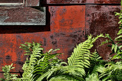 Detail Old House With Ferns Royalty Free Stock Photos