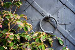 Detail of an old iron door, with a snake-shaped knocker Stock Image