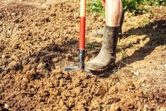Detail on old man foot in dirty black rubber wellington boots, s. Pading soil. Spring gardening royalty free stock image