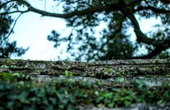Detail of old ston, tree and greenery in one park. royalty free stock photos