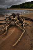 Detail of old tree stump on the sand beach Stock Photo