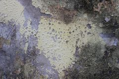 Old dirty rough wall texture background. Detail of an old wall texture with grunge effect Stock Photos