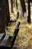 Old wood bench i a park. Detail of an old wood bench in a park in autumn ,shallow dof royalty free stock image