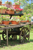 Detail of an old wooden wagon. With many pots of flowers in summer Royalty Free Stock Image