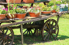 Detail of an old wooden wagon. With many pots of flowers in summer Stock Images