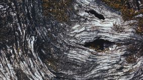 Detail of olive tree bark Royalty Free Stock Photos