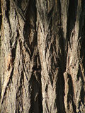 Detail of One Trunk Royalty Free Stock Photos