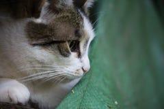 Detail op een wit en gestreepte katkat tegen het zitten op een stapel van hout met een oude stof in de lagere juiste hoek Stock Foto's