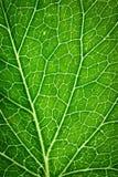 Detail op groene bladhaarvaten Royalty-vrije Stock Foto