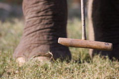 Detail op het spel van het olifantspolo, olifantspoten en bal, Thakurdwara, Bardia, Nepal Royalty-vrije Stock Fotografie