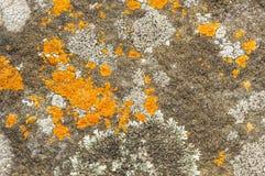 Detail orange lichen in rain forest. Royalty Free Stock Photo