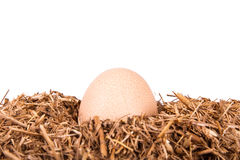 Detail of Organic Egg in Nest Stock Image