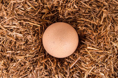 Detail of Organic Egg in Nest Stock Photo
