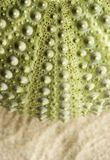 Detail of the outer wall of a sea urchin Royalty Free Stock Photos