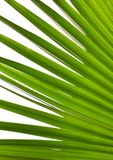 Leaves. Detail of overlapping palm leaves Stock Photo