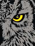 Detail of owl (his yellow eye) Stock Image