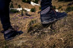 Detail of a pair of mountaineer boots with some mud on them used by a hiker with the right foot resting on a rock and crocus stock photo