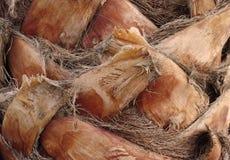 Palm bark Royalty Free Stock Photo