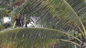 Detail of palm leaves blowing in the wind. On a sunny day at Xpu-Ha beach in Mexico stock footage