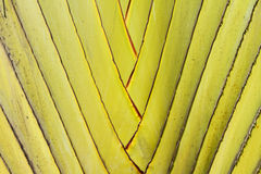 Detail of palm tree Royalty Free Stock Images