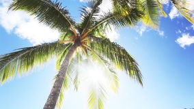 Detail of palm tree against blue sky with sun stock footage