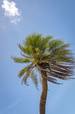 Detail of a Palm tree alone in Curacao Stock Photo