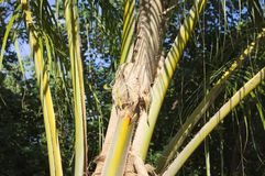 Detail of a palm tree stock photography