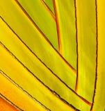 Detail palm tree Stock Image
