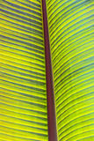 Detail of palm tree Royalty Free Stock Image