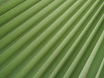 The Detail of a Palm Tree Royalty Free Stock Photos