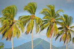 Detail of palm trees, Playa El Espino Stock Images