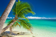 Detail of a palm trees on a vibrant beach in Fiji Royalty Free Stock Photos