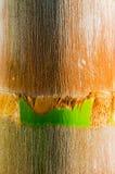 Detail of Palmtree Royalty Free Stock Photo