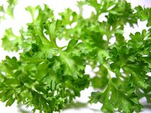 Detail parsley herb Royalty Free Stock Image