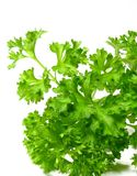 Detail parsley herb Royalty Free Stock Images