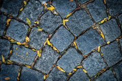 Detail of pavement with tiny yellow autumn leaves Royalty Free Stock Photography