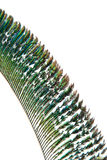Detail of peacock feather Royalty Free Stock Images