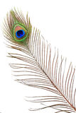 Detail of peacock feather eye stock photography