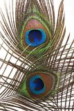 Detail of peacock feather eye Royalty Free Stock Image