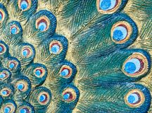 Detail of the peacock tail pattern. Stock Photos