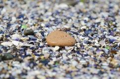 Detail of a pebble stock photos