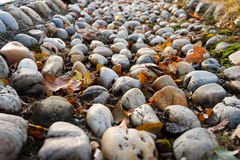 Detail of pebbles way Stock Images