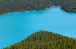Detail of Peyto lake, with turquoise water and forest, Royalty Free Stock Photo