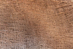 Detail-Pflanzengewebe-Stamm einer Palme Stockfotografie