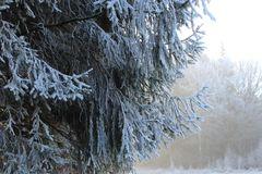 Frozen tree in winter royalty free stock images