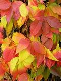 Detail photography of autumn leaves Royalty Free Stock Photography
