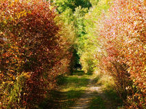 Detail photography of autumnal bushes alley. Color photography of color autumnal alley Stock Photography