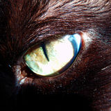 Detail photography of cat eye Stock Photo
