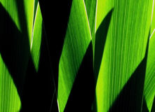 Detail photography of green grass Royalty Free Stock Image